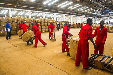 Local workers at a Tobacco auction in Lilongwe, Malawi, Africa