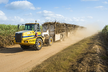 Full loaded sugar cane truck driving through the sugar cane fields on a dusty road, Nchalo. Malawi, Africa