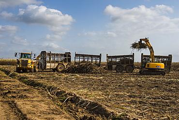 Huge sugar cane truck in the sugar fields, Malawi, Africa