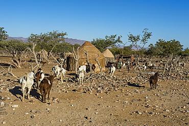 Himba gral (compound), near Sesriem, Kakovelt, Namibia, Africa
