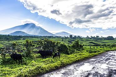 The volcanic mountain chain of the Virunga National Park after the rain, UNESCO World Heritage Site, Democratic Republic of the Congo, Africa