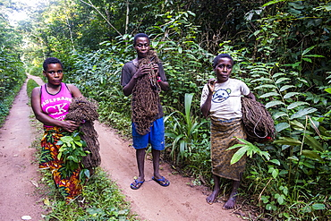 Baka pygmies on their way to go net-hunting, in the Dzanga-Sangha Special Reserve, UNESCO World Heritage Site, Central African Republic, Africa