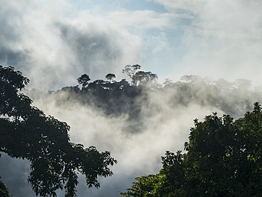 Rainforest deep in the jungle of Cameroon, Africa