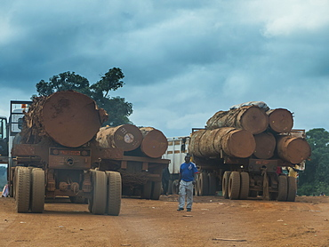 Logging trucks, deep in the jungle, Cameroon, Africa