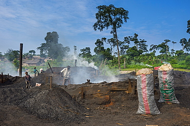 Coal production out of wood (charcoal), Libongo, deep in the jungle, Cameroon, Africa