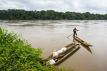 Sangha River, bordering Central African Republic, deep in the jungle of Cameroon, Africa