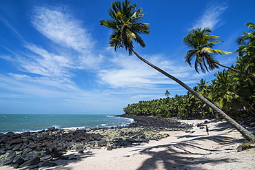 Palm tree on a white sand beach on Saint Joseph Island, Iles du Salut, French Guiana, Department of France, South America