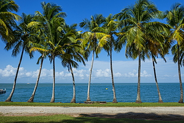 Palm tree line, Royal Island, Iles du Salut, Devils Island, French Guiana, Department of France, South America