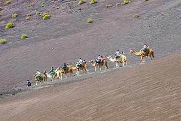 Tourist camel riding in the lava sands of Timanfaya National Park, Lanzarote, Canary Islands, Spain, Atlantic, Europe