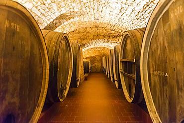 Old barrels in the Shabo winery, Black Sea, Ukraine, Europe
