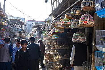 Birds for sale, Bird Street, Kabul, Afghanistan, Asia