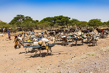 Caravan of Peul nomads with their animals in the Sahel of Niger, West Africa, Africa