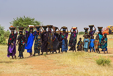 Local women arriving on the Gerewol festival, courtship ritual competition among the Wodaabe Fula people, Niger, West Africa, Africa
