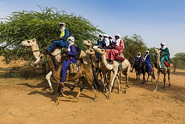 Tuaregs on their camels, Gerewol festival, courtship ritual competition among the Wodaabe Fula people, Niger, West Africa, Africa