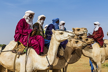 Tuaregs on camels, Gerewol festival, courtship ritual competition among the Wodaabe Fula people, Niger, West Africa, Africa