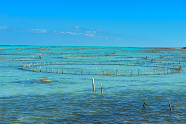 Caicos conch farm, Providenciales, Turks and Caicos, Caribbean, Central America