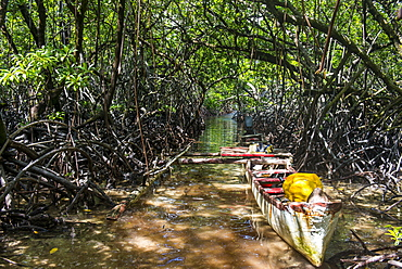 Swamp area in the Utwe lagoon, UNESCO Biosphere Reserve, Kosrae, Federated States of Micronesia, South Pacific