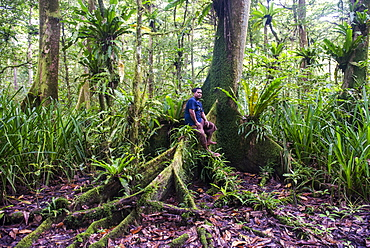 Man sitting in the Yela Ka forest conservation area of ka trees (Terminalia carolinensis) in the Yela Valley, Kosrae, Federated States of Micronesia, South Pacific