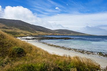 View over Carcass Island, Falkland Islands, South America