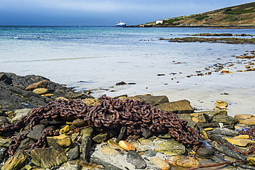 Rusty chain on a beach, Carcass Island, Falkland Islands, South America