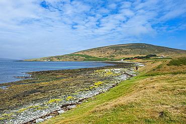 Pretty bay in Carcass Island, Falkland Islands, South America