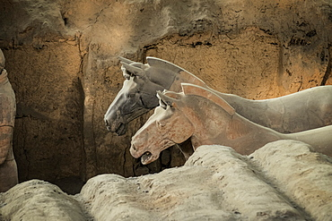 Horses, Terracotta Army, UNESCO World Heritage Site, Xian, Shaanxi, China, Asia