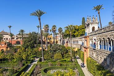 Alcazar Gardens, UNESCO World Heritage Site, Seville, Andalusia, Spain, Europe
