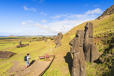 Moai heads of Easter Island, Rapa Nui National Park, UNESCO World Heritage Site, Easter Island, Chile, Polynesia, South America