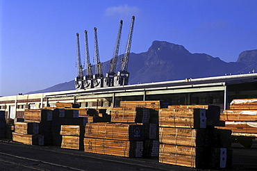 Logging, south africa. Cape town. Timber ready for export at the harbour