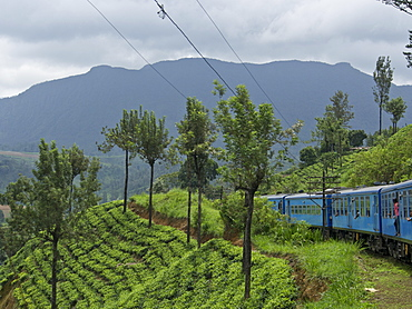 Tea plantations on train journey from Kandy to Ella, in the highlands of Sri Lanka, Asia