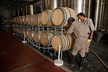 Quality control at the Etchart vineyard in Cafayate region, Salta, Argentina, South America