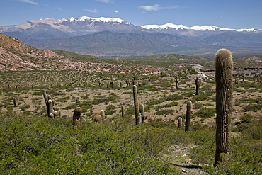 Los Cardones National Park (Valley of Cactus National Park), with Nevado Cachi snowcapped mountain range in Andes region, Salta, Argentina, South America