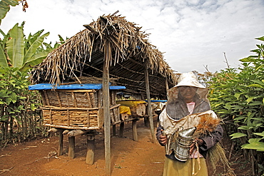 Farmer working in a honey producing co-operative in the Masha area of Ethiopia, Africa