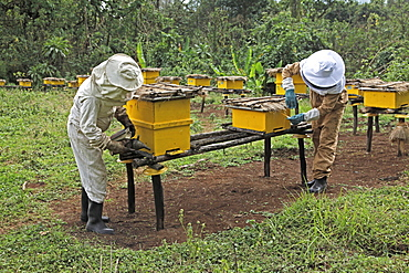 Farmers working in a honey producing co-operative in the Masha area of Ethiopia, Africa