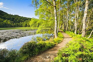 Trail in Craigellachie National Nature Reserve, Highlands, Scotland, United Kingdom, Europe - 1189-100