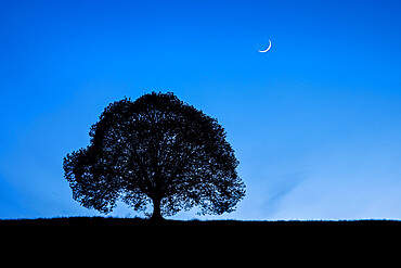Silhouette of lime tree at night under crescent moon and night sky, Zurich, Switzerland, Europe - 1189-106