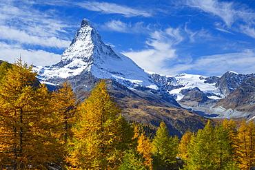 Matterhorn and larch tree forest in autumn, Valais, Swiss Alps, Switzerland, Europe