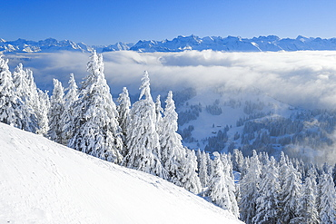 View from Rigi Kulm, Swiss Alps, Switzerland, Europe - 1189-61