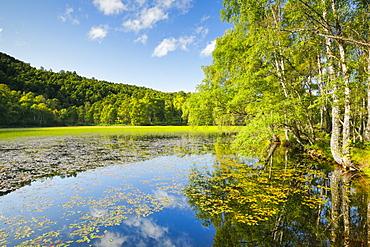 Pond in Craigellachie National Nature Reserve, Highlands, Scotland, United Kingdom, Europe - 1189-93