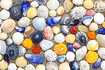 shells on beach, Sutherland, Scotland, arranged