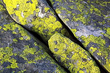 Flechten auf Fels in Schweizer Alpen, Berner Oberland, Bern, Schweiz
