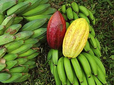 Nicaragua bananas and cacao pods