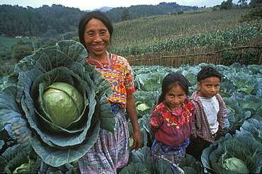 Guatemala woman and children with cabbage harvest, quetzaltenango