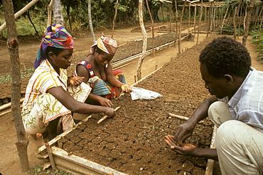 Burundi reforestation nursery, rumonge