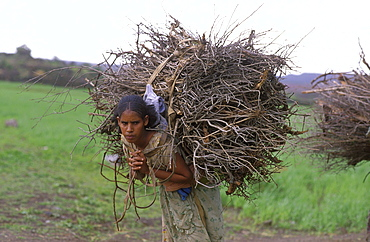 Eritrea woman carrying firewood asmara