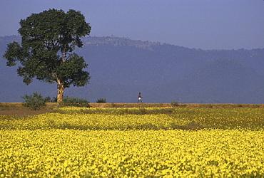 India landscape in bloom bihar