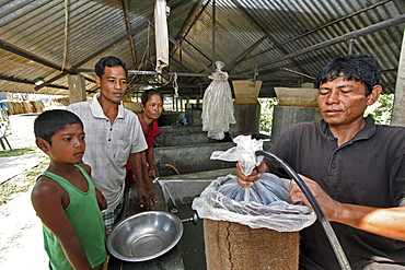 Bangladesh family buying fish fingedrlings for stocking the pond on the farm, at a hatchery in haluaghat, mymensingh region. They are members of the garo tribal minority. Adding oxygen to the plastic bag of fish so they will survive longer in transit.