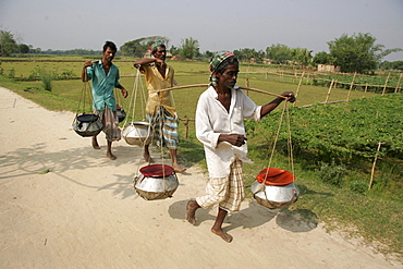 Bangladesh farmers carrying fish fingerlings from a nearby hatchery to the ponds on their farm, kumargati village, mymensingh region