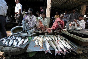 Bangladesh fish on sale at market at haluaghat, mymensingh region