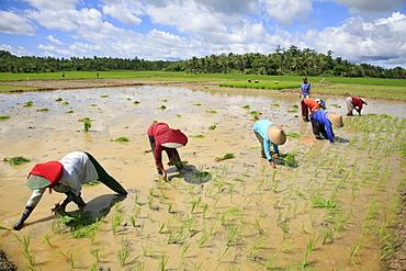 Indonesia sunda, west java